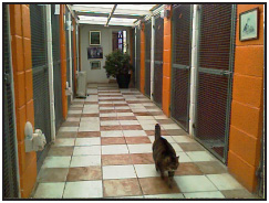 Cattery Woodfarm Kennels And Cattery Are Based In